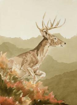 Buck in the Wild